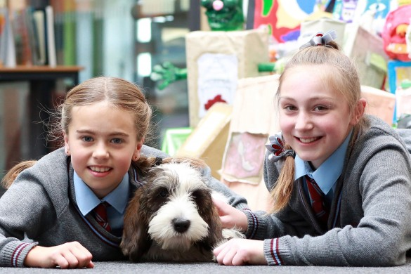 dexter-dog-hope-primary-pupils