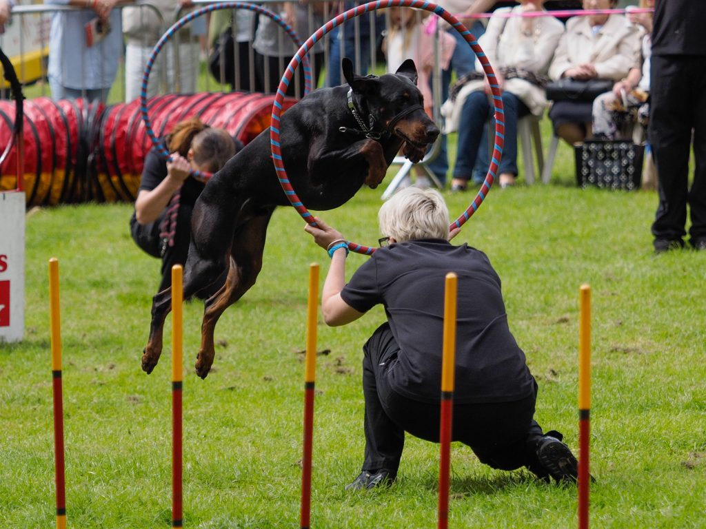 H&M Dogs Knowsley Flower Show